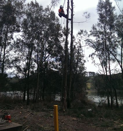 Work by Avoca Lake for Council