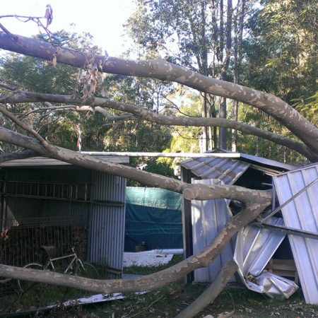 Fallen tree over small shed