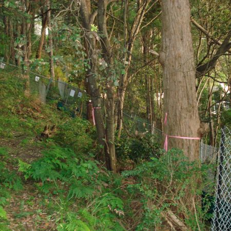 Part of sloping site with marked trees to be removed