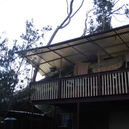Large fallen gum over rear verandah