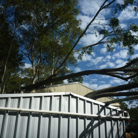 Fallen tree over large shed