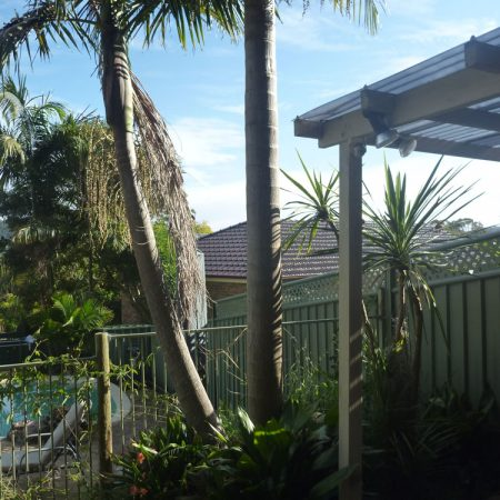Two palms to be removed near pool