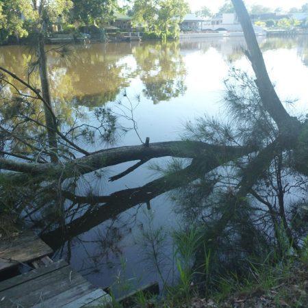 Crown Lands work - Fallen tree at Chittaway Point