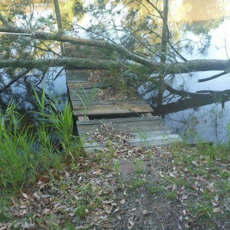 Fallen tree across pontoon