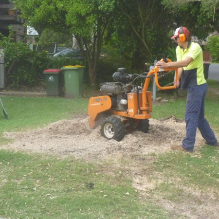 Grinding the stump after removal