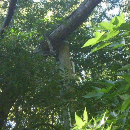 Fallen tree on power pole