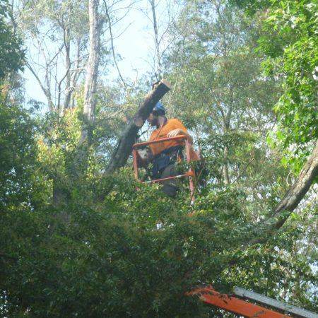 Cutting fallen tree away from power pole